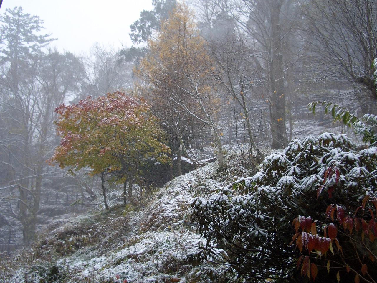 もみじと雪2