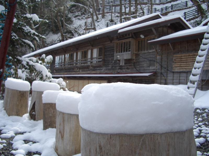 庭の丸太のベンチ