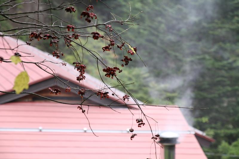 マユミの実と煙突の煙
