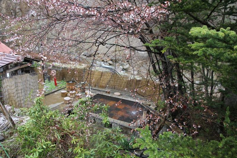 桜開花と露天風呂