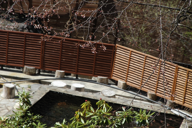 露天風呂桜